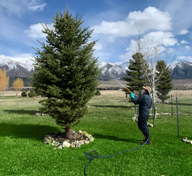 lawn and tree care