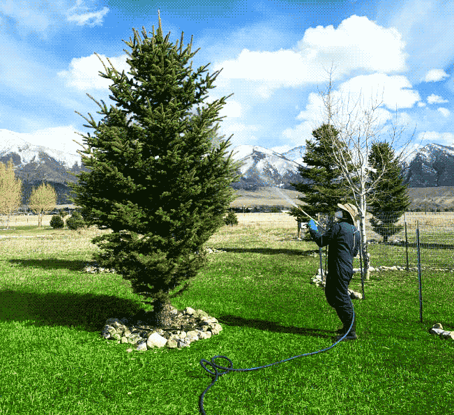 Lawn and Tree Care Services